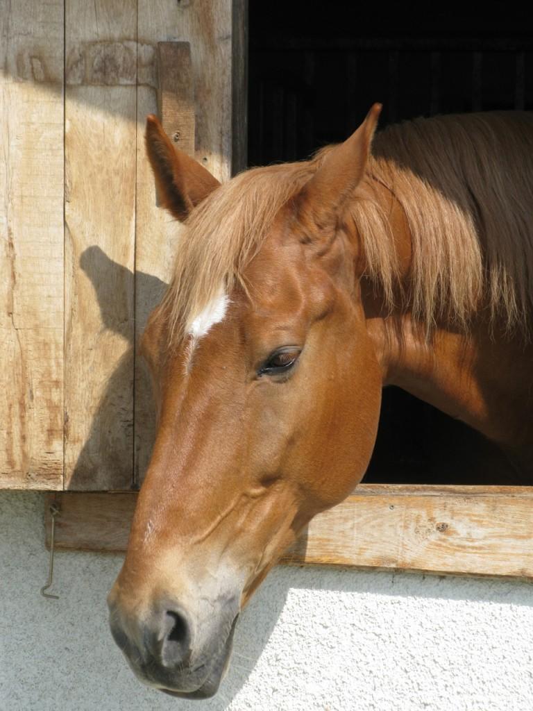 horse-1094937_1280