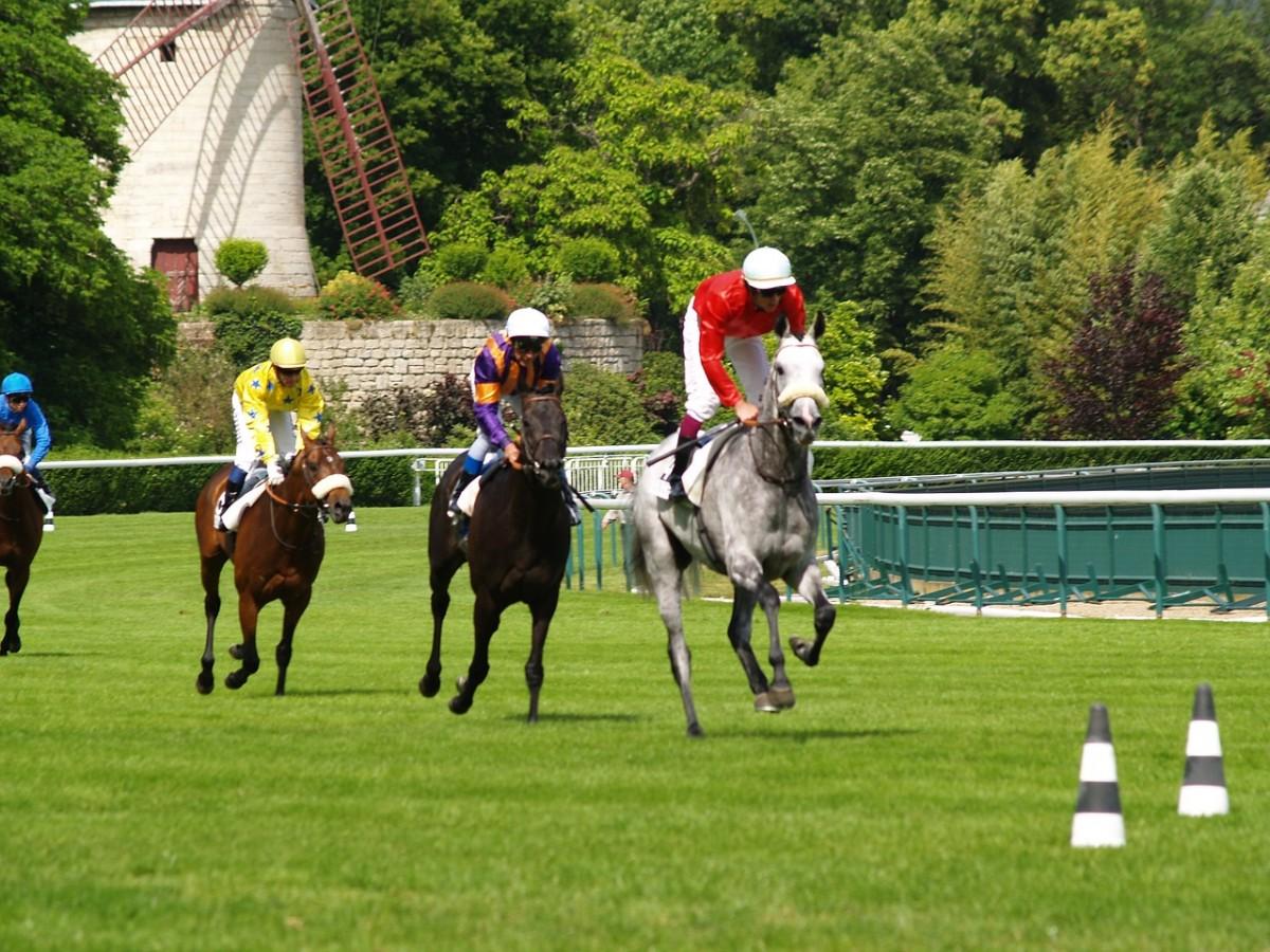 Der Pferderennsport – Fakten und Zahlen rund um den Sport